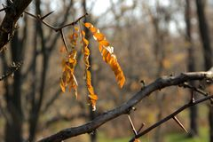 Herbstskizze Stockfotografie