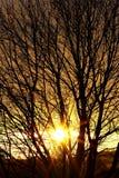 Herbstsonne hinter Zweigen Lizenzfreie Stockfotos