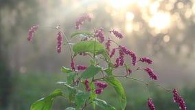 Herbstsonnenaufgang und Herbstblumen stock video