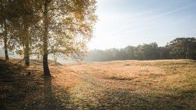 Herbstsonnenuntergang über einer Wiese lizenzfreie stockbilder