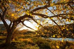 Herbstsonnenuntergang Lizenzfreie Stockbilder