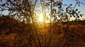 Herbstsonnenuntergang hinter bunten Blättern Stockbilder