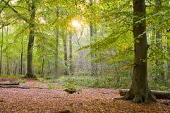 Herbstsonnenuntergangwald Lizenzfreies Stockbild