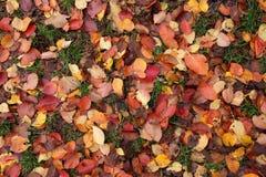 Herbstspiel von Farben Lizenzfreies Stockfoto