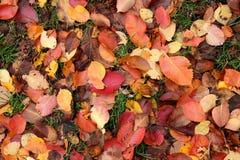 Herbstspiel von Farben Stockfotos