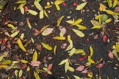 Herbstspiel von Farben Stockfoto