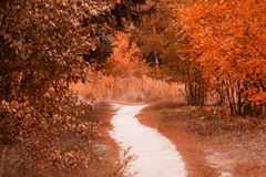Herbstspur überschreitet entlang die befleckten Anlagen und die Reste gegen den Wald Stockfotografie