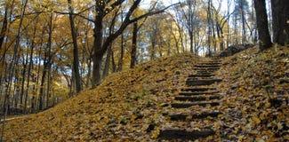 Herbstspur Stockbild