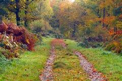 Herbstspur stockfotografie