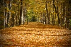 Herbstspur lizenzfreie stockfotos