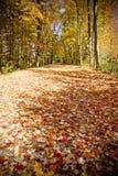 Herbstspur Stockfotos