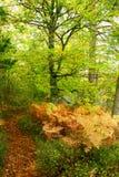 Herbstspur in einem Wald Lizenzfreies Stockfoto