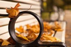 Herbstspuren Lizenzfreies Stockbild