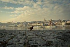 Herbststadt Budapest lizenzfreie stockfotos