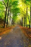 Herbststadtpark mit Sonnenstrahlen Stockfotos