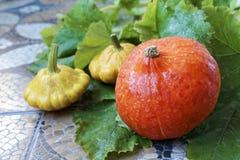 Herbststillleben des Kürbises und des pattypan Kürbisses auf grünem Blatthintergrund lizenzfreies stockfoto