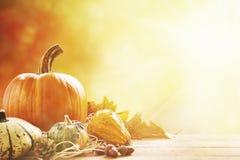 Herbststillleben im hellen Sonnenlicht Stockfotografie
