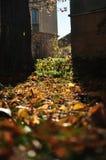 Herbststimmung Stockbilder