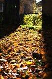 Herbststimmung Lizenzfreies Stockbild