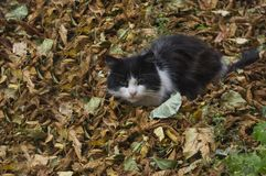 Herbststimmung an einer Katze Stockfoto
