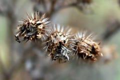 Herbststimmung - Klette Stockfoto