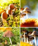 Herbststimmung, Pilzjahreszeit lizenzfreies stockfoto