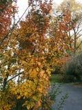 Herbststräuche Lizenzfreie Stockfotografie