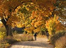 Herbststraße Lizenzfreies Stockbild