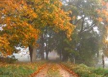 Herbststraße lizenzfreie stockbilder