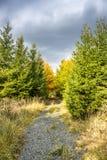 Herbststraße in den Wald Lizenzfreie Stockbilder