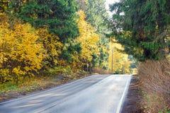 Herbststraße, die in den Abstand einsteigt Gelbblätter auf Bäumen stockfotografie