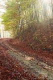 Herbststraße durch den Wald mit Sonnenseitesonne strahlt aus Lizenzfreies Stockfoto