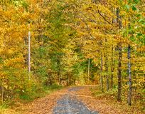 Herbststraße in Maine stockfotografie
