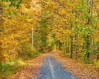 Herbststraße in Maine stockfotos