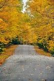 Herbststraße in Maine stockbild