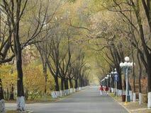 Herbststraße von Insel Harerbin Sun Stockfotos