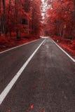 Herbststraße durch den Wald Stockbild