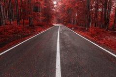 Herbststraße durch den Wald Stockfotografie