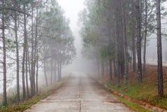 Herbststraße und -nebel um Bäume Stockfotos