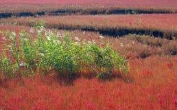 Herbststrand Stockbild