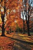 HerbstStroll Stockfoto