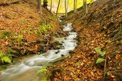 Herbststrom durch die Bäume stockfotos