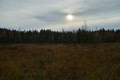 Herbstsumpflandschaft lizenzfreies stockfoto