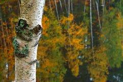 Herbstszene Stockbild