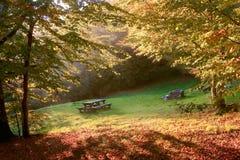 Herbstszene Stockfotografie