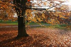 Herbstszene Lizenzfreies Stockbild