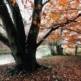 Herbstszene Driffield Ost-Yorkshire England Lizenzfreie Stockfotografie