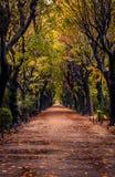 Herbstszene mit Gasse in einem Park an einem regnerischen Tag stockfoto