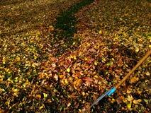 Herbstszene mit Hunderten von den bunten Blättern Stockbilder