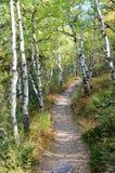 Herbstszene in Rockies Lizenzfreies Stockbild
